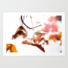 Autumn Sonata II Art Print