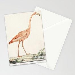 Common flamingo Phoenicopterus roseus (1596-1610) by Anselmus Botius de Boodt Stationery Cards