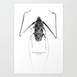 Acrocinus (B&W) Art Print