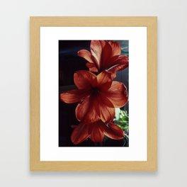 Three red flowers Framed Art Print