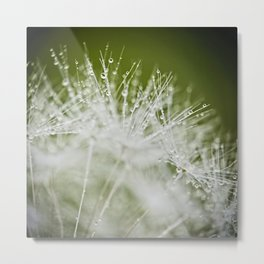 Dandelion Water Drop Macro 4 Metal Print