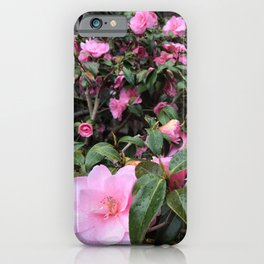 Vibrant pink roses in Scotland iPhone Case