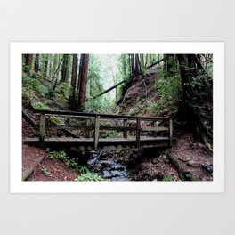 Bridge at Henry Cowell Art Print