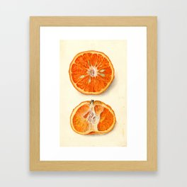 Vintage Painting of Tangerines Framed Art Print