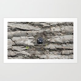 Tree trunk & Tiny Tiny Camera Art Print