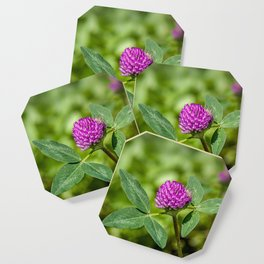 Red Clover Coaster