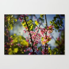 In the mood for pink Canvas Print