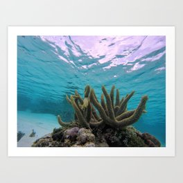 Underwater Coral Art Print