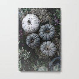 Pumpkins in Shades of Grey Metal Print