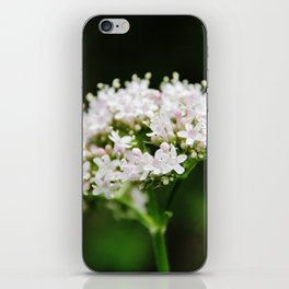 Tiny white garden flowers iPhone Skin