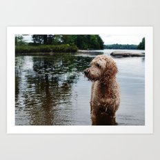 Dog in a lake Art Print
