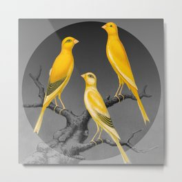 Yellow Canaries on Gray Metal Print