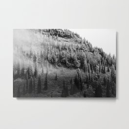 Snow dusted trees Metal Print
