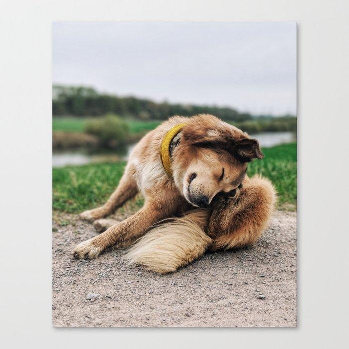 Head-Scratcher Canvas Print