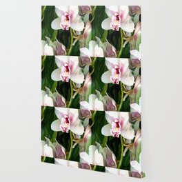 The Gift of an Orchid Wallpaper