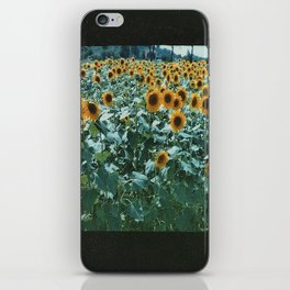 Sunflower Fields  iPhone Skin