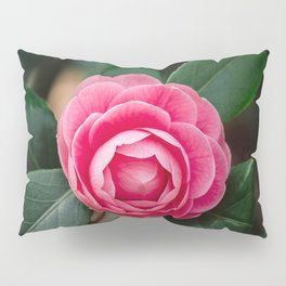 Pink Perfection Camellia Japonica Blooms in Spring Pillow Sham