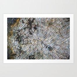 Old Tree Rings Art Print