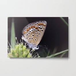 Spotted Butterfly 1 Metal Print