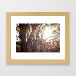 Just Looking Back Framed Art Print