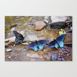 Amazing Trio Canvas Print