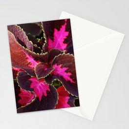 Intricate Coleus Design Stationery Cards