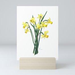 Little Daffodils Botanical Illustration Mini Art Print
