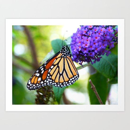 monarch II Art Print
