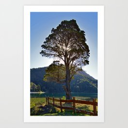 The Big Tree at Patagonian Lake Art Print