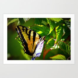 Butterfly- close and personal Art Print