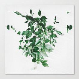 Seed Dreams Canvas Print