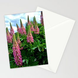 Rose Lupins in the Garden Stationery Cards