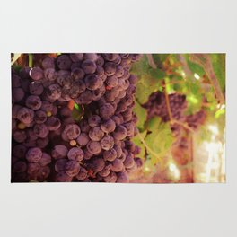 Vineyard Vines Rug