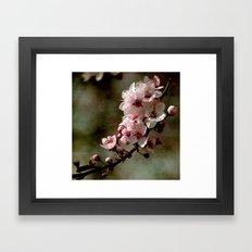 Pretty Cherry Blossoms Framed Art Print
