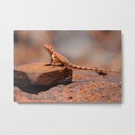 Karijini Lizard Metal Print