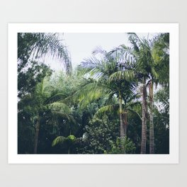 Palm Trees in a Tropical Garden Art Print