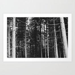 The Woods Art Print