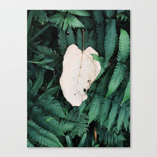 Nature Walk 001 - White Leaf Canvas Print
