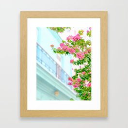 Colonial Havana Architecture with Pink Bougainvillea Framed Art Print