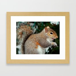 The sneaky one Framed Art Print