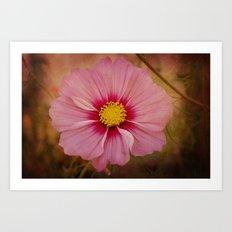 Pink Cosmos Art Print