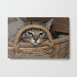 Kitty and the Basket Metal Print