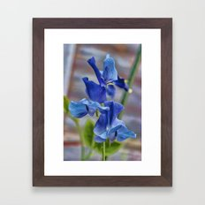 Sweet Pea Flower Framed Art Print