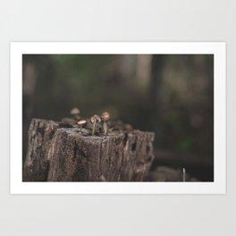 Tiny Mushrooms Art Print