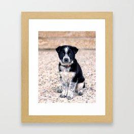Theo Sit Stay Framed Art Print
