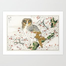 Short-eared Owl and Cherry Flower  from Pictorial Monograph of Birds (1885) by Numata Kashu (1838-1901) Art Print