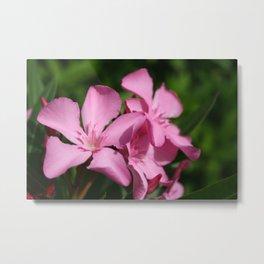 Pink Oleander Blossom Metal Print