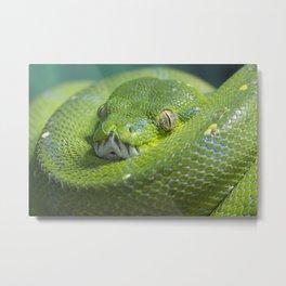Green Tree Python Metal Print