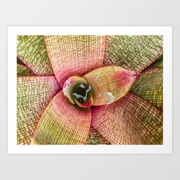 Red and Green Succulent Art Print