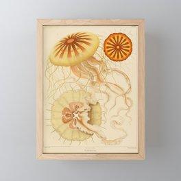 Jellyfish by Ernst Haeckel from his monograph of deep-sea medusae (1879) Framed Mini Art Print